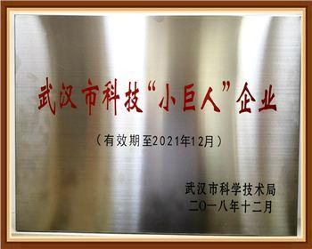 """武汉科技""""小巨人""""企业"""